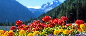 la-primavera-dei-fiori-1200x500
